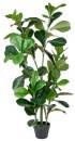 40-off-Jumbo-Fiddle-Leaf-Plant Sale